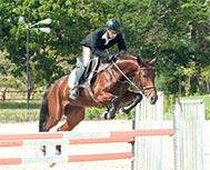 Havana's Seventh Elite Horse Auction, a Jump Towards Excellence