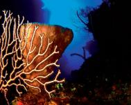 Cienfuegos, An Ideal Place for Diving in Cuba
