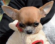 Dog show in Havana Promotes Animal Care