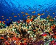 Coral Reefs in Cuba Are Strong and Healthy, Expert Says