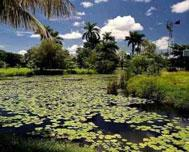 Cuban Wetland Will Show Nature and History in Turnat-2019