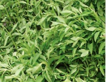 Plant, herbs and flowers to improve your health