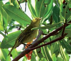 Bird Paradise