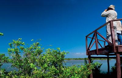 Zapata Wetland, A Captivating Tourist Destination in Cuba