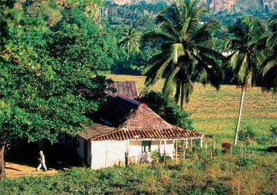 Pinar del Río: tobacco growing land
