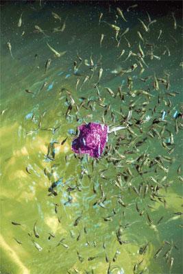 Alfredo Sarabia, Spontaneity Within Marvellous Reality