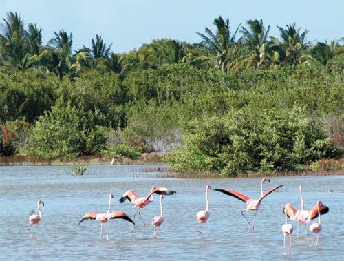 Praise for Biodiversity Protection in Cuba