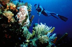Adventures in the Depths