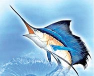 Hemingway International Billfish Tournament - Find excitement and adventure in Cuban waters