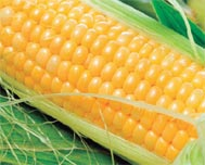 History of a Corn Dish